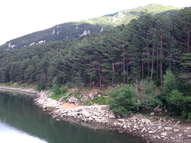 Muitos pinheiros