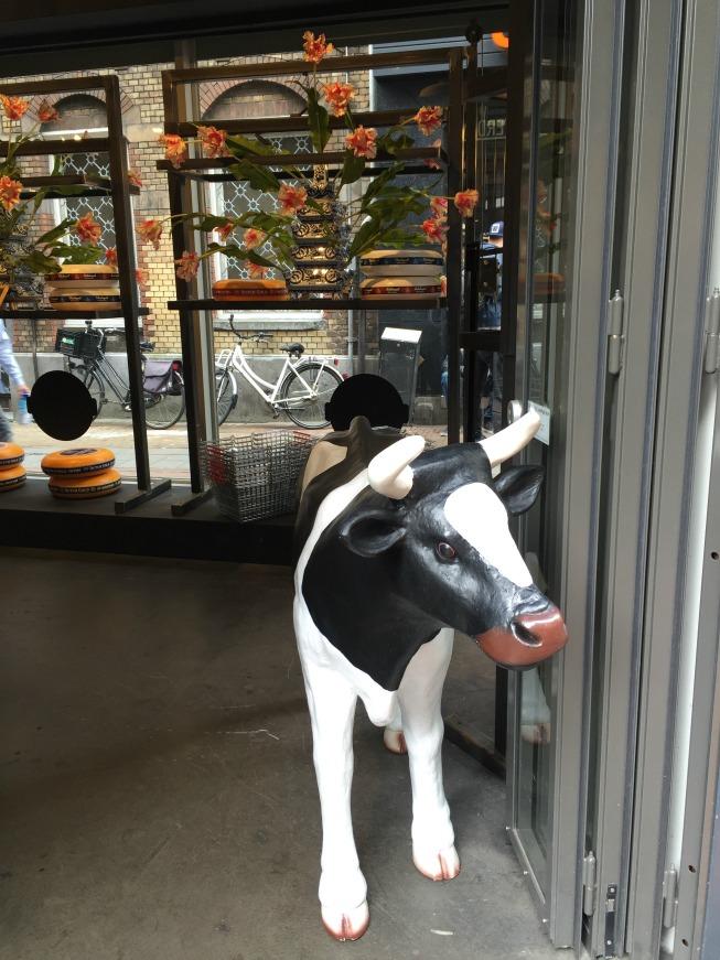 Vaquinha na entrada da loja de queijo em Amsterdam
